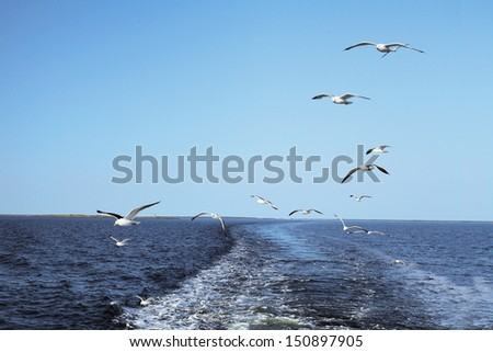 Sea gulls fly behind a ship