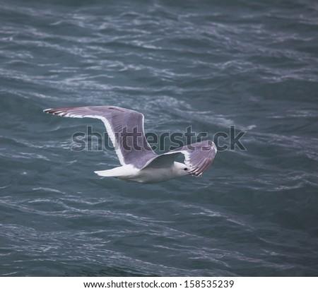 Sea gulls in port,Alaska - stock photo