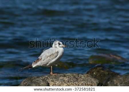 sea gulls on a rock