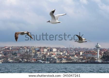 Sea gulls on bosphorus in Istanbul, Turkey. - stock photo