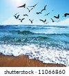 Sea gulls on coast - stock photo