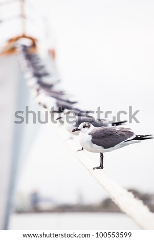 Sea gulls resting on a mooring line connected to a ship. - stock photo