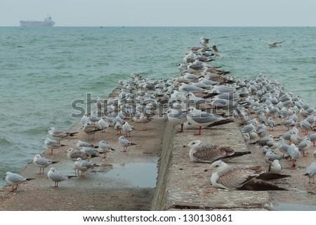 Sea gulls resting on the pier - stock photo