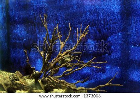 Sea hedgehog - stock photo