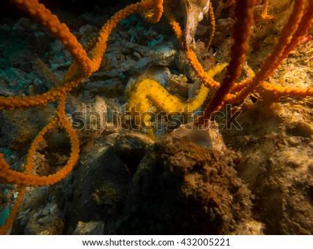 sea horse - stock photo