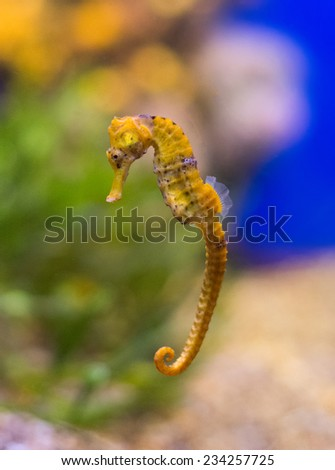 Sea horse in the depths of the sea. - stock photo