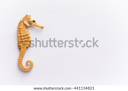 Sea horse isolated on white background