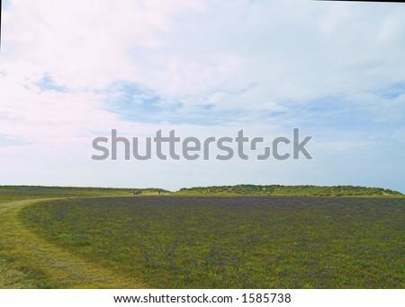 Sea lavender at Holkham North Norfolk UK - stock photo