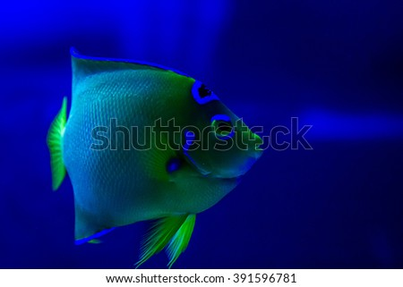 Sea life: exotic tropical coral reef fish
