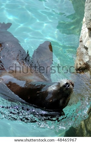 Sea Lion-Buffalo Zoo-Buffalo.N.Y. - stock photo
