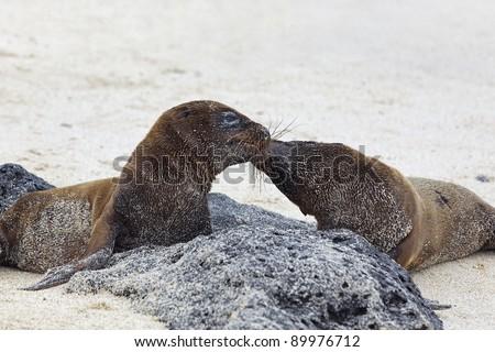Sea lion colony - stock photo