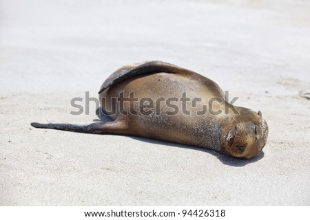 Sea lion colony on Santa Fe island, Galapagos - stock photo