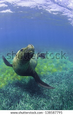 sea lion looked up - stock photo