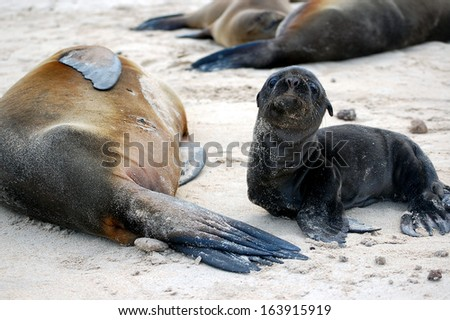Sea lion mother and cub.