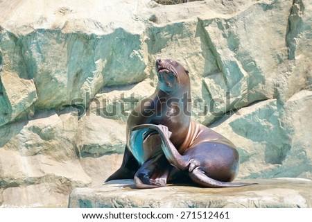 Sea lion on rocks. - stock photo