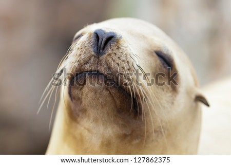 Sea Lion relaxing in the California Sun at Monterey Bay - stock photo