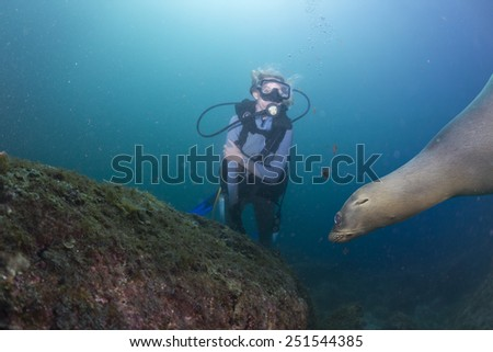 sea lion seal approaching blonde diver girl underwater - stock photo