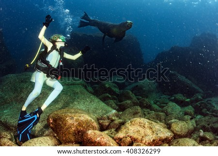 sea lion seal coming to beautiful blonde diver girl underwater - stock photo