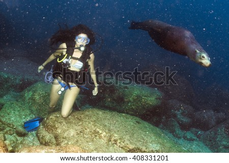 sea lion seal coming to Black hair young and pretty mexican latina Scuba diver - stock photo