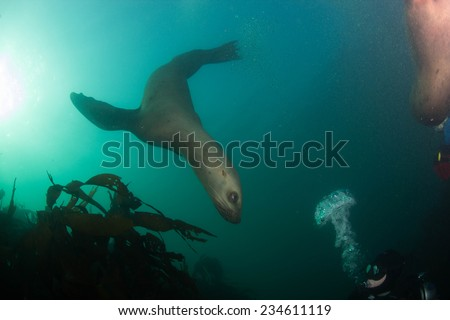 Sea Lions - stock photo