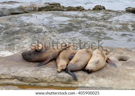 Sea lions are sleeping on the rocks - stock photo