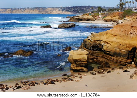Sea Lions at Children's Beach in San Diego - stock photo