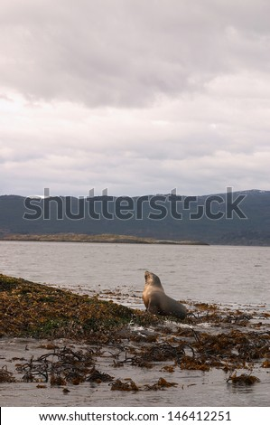 Sea lions island - stock photo