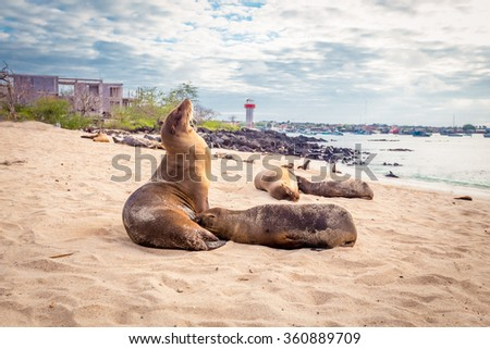 sea lions on Mann beach San Cristobal, Galapagos Islands - stock photo