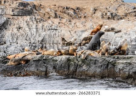 Sea lions on the rock, Beagle Channel, Tierra del Fuego - stock photo
