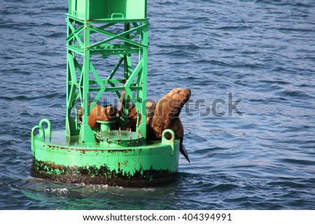 Sea lions resting on a buoy - stock photo