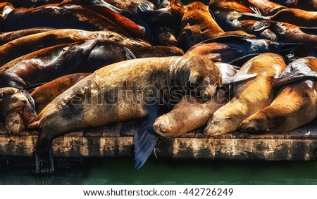 Sea Lions sleeping on dock, Fishermans Wharf, Pier 39, San Francisco - stock photo