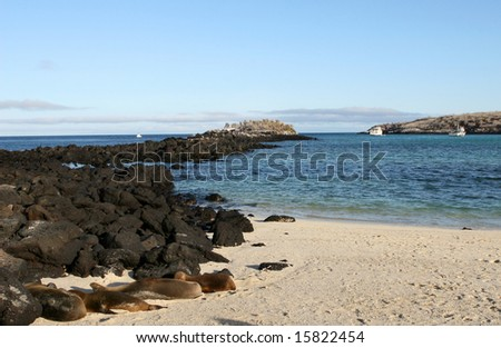 Sea Lions sun themselves on the beach of Santa Fe Island, Ecuador - stock photo
