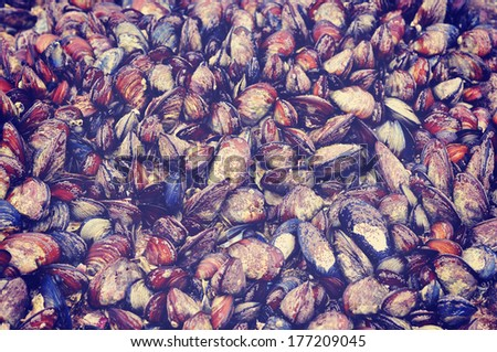 Sea mussels attached to a rock in law tide, retro vintage look - stock photo