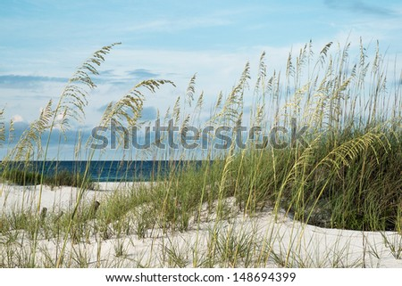 Sea oats and native dune grasses in the sand dunes, overlooking deep blue water of the Gulf of Mexico. - stock photo