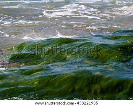 Sea ocean rocks covered with seaweed great beach shore background image       - stock photo