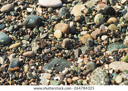 Sea pebble colorful vivid wet background, vintage, shallow depth of field