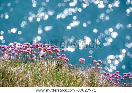 Sea pinks - thrift, armeria maritima - against a sparkling sea, on the Dorset coast (UK) - stock photo