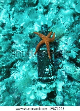 Sea pollution - a beer bottle on the bottom of the sea
