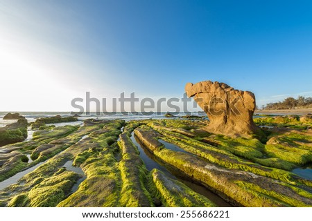 Sea rocks and green moss against blue sky on the coast in the early morning, Co Thach beach, Binh Thuan, Vietnam, Southeast Asia.  - stock photo