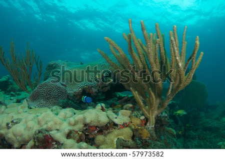Sea Rod On A Reef Ledge in Broward County, Florida - stock photo