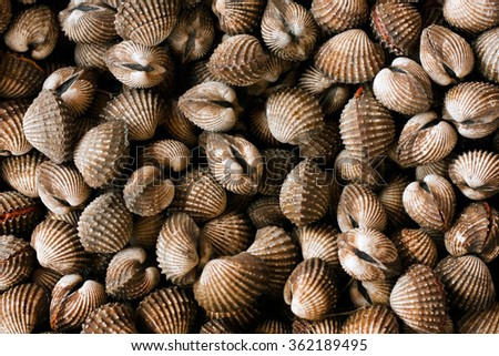 Sea scallop in seafood market - stock photo