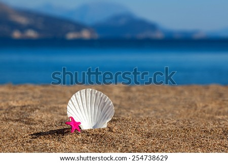 Sea shell  and starfish on a beach - stock photo