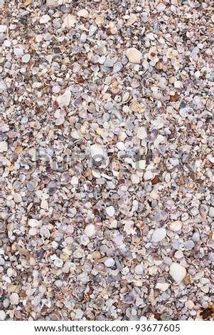 Sea shell background - stock photo