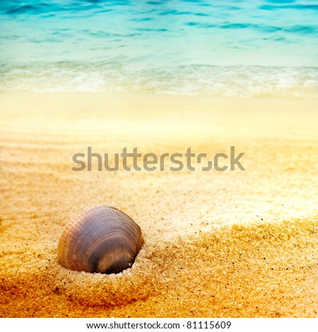 Sea shell background  on fine goden sand with copyspace - stock photo