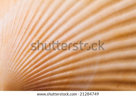 sea shell close up - stock photo