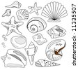 Sea Shell Collection is hand drawn original artwork. - stock photo