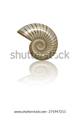 Sea Shell 3D Bitmap Illustration (isolated, with clipping path) - stock photo