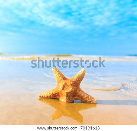 Sea Shell Dream - stock photo