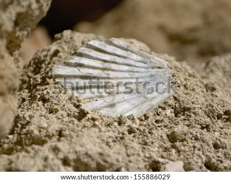 Sea shell fossil in  surface of the rock - stock photo