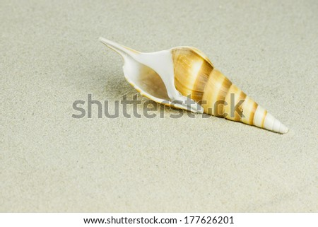 sea shell in sand - stock photo